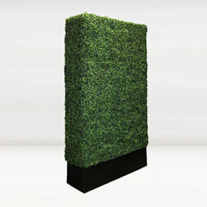Tall Boxwood Wall
